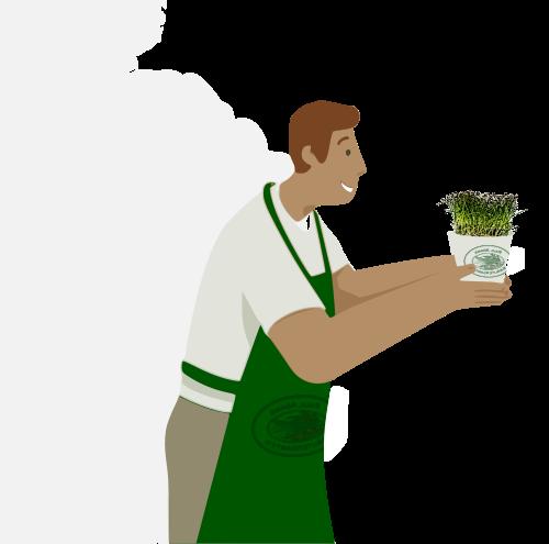 Kresse Gartenkräuter frisch